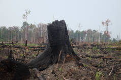 Foresta devastata dagli incendi in Indonesia