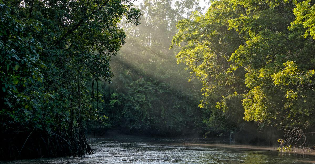 Foresta pluviale salviamo la foresta - Gli animali della foresta pluviale di daintree ...