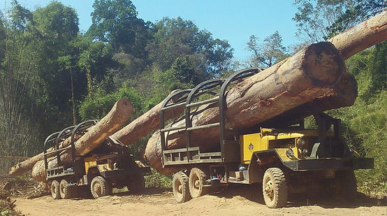 Camion per il contrabbando di legno dalla Cambogia verso Vietnam