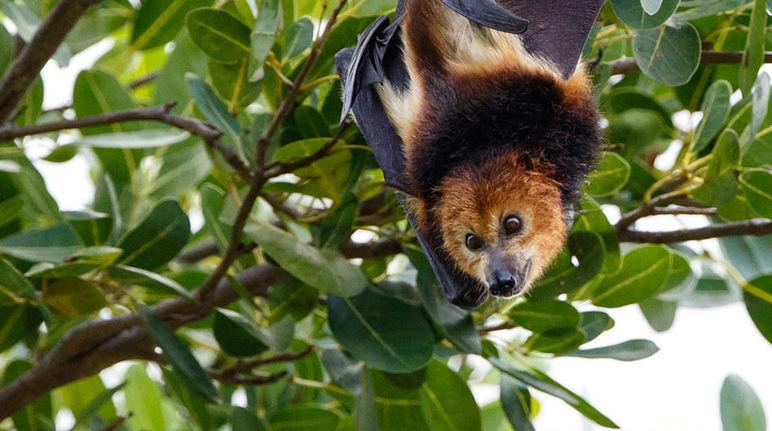 Risultati immagini per animali della foresta tropicale pipistrelli