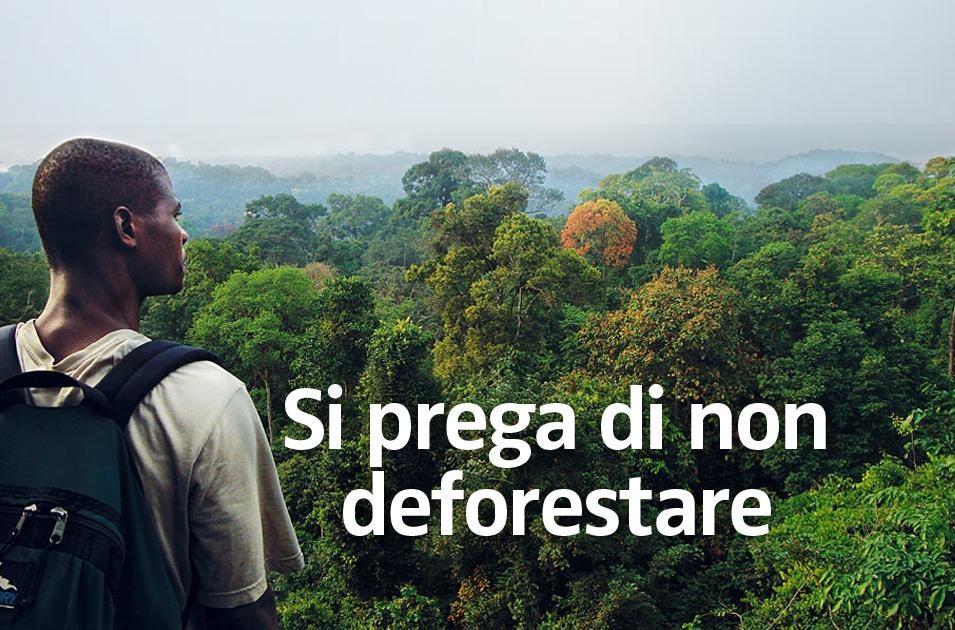 Risultati immagini per ecuador salviamo le foreste