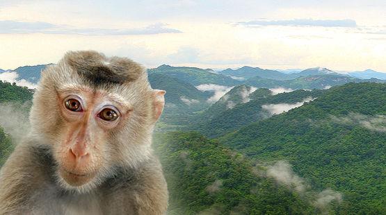 Un animale in estinzione nel parco Dong Phayayen-Khao Yai in Tailandia